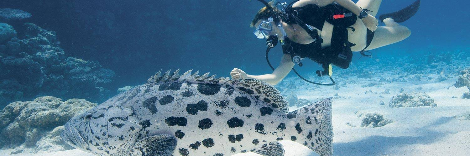 Scuba diver with a large fish on Lizard Island
